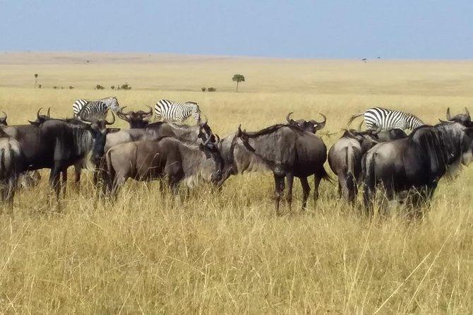 4 Days Lake Nakuru and Masai Mara Game Reserve