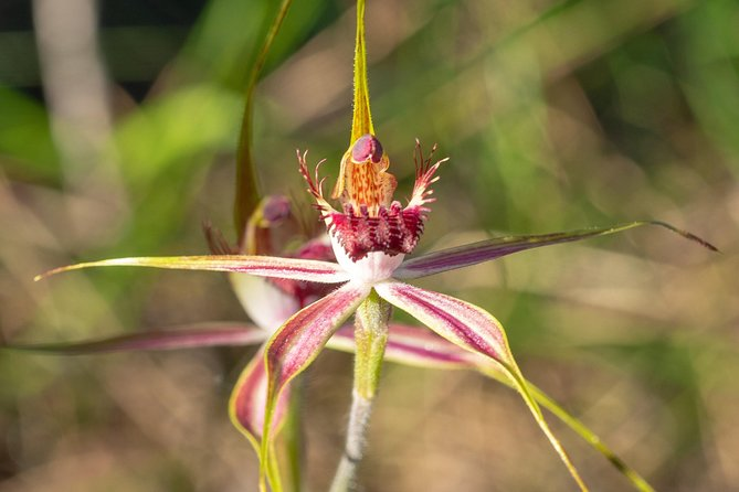 Orchids and Wildflowers Photographic Day tour from Perth