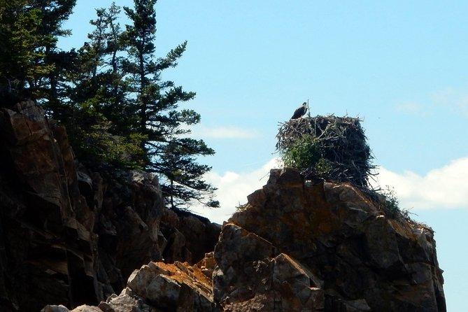 Osprey Nest on Sutton's Island