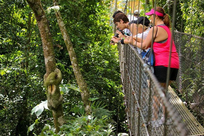Arenal Hanging Bridges From Arenal