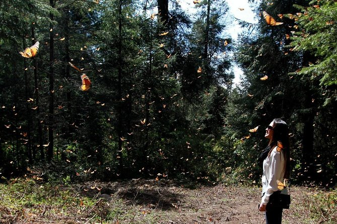 Monarch Butterfly Sanctuary Day Trip from Mexico City