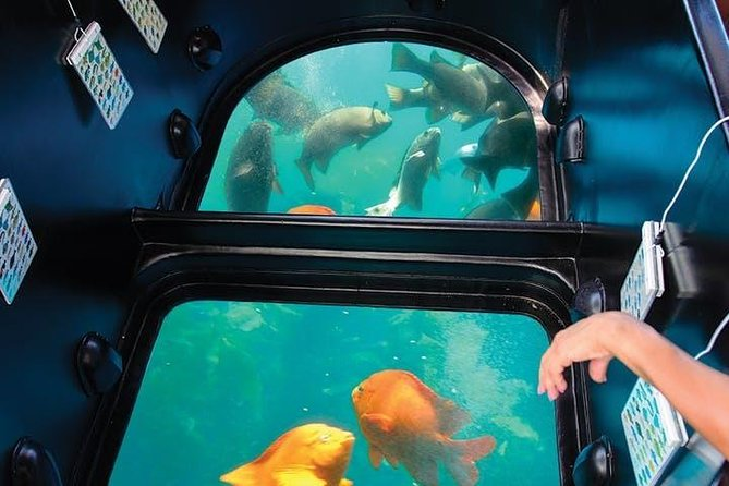 Santa Catalina Island Day Trip Private Transfer Roundtrip From/To Los Angeles..