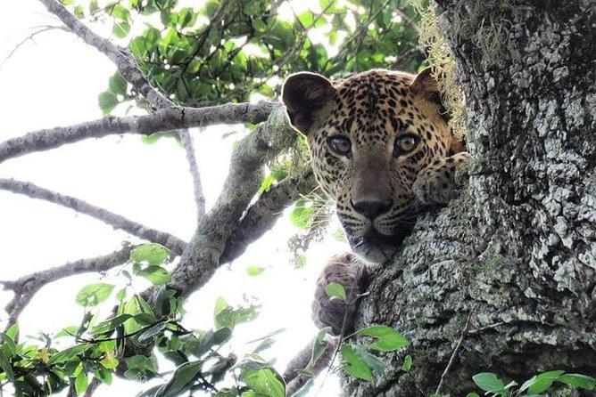 Yala National Park Private Safari from Ella