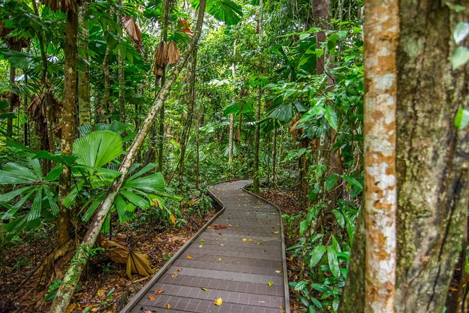 Daintree Afternoon Nocturnal Nature and Wildlife Tour