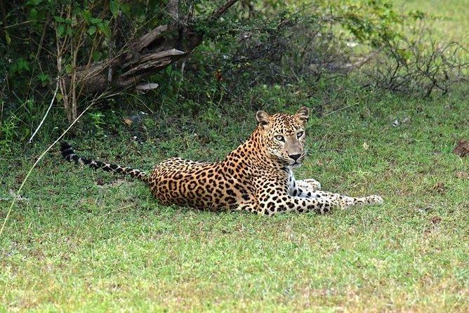 Wild Life & Eco Tourism Sri Lanka