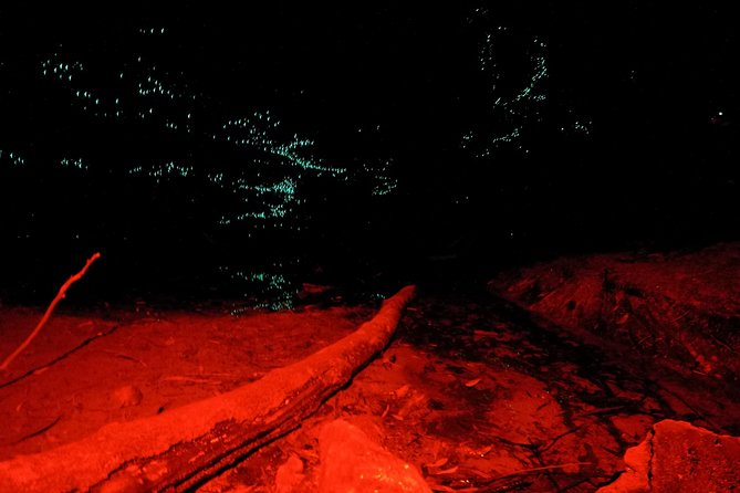 Blue Mountains Hiking Glow worms Cave Wildlife Spotlighting Night Adventure photo 4