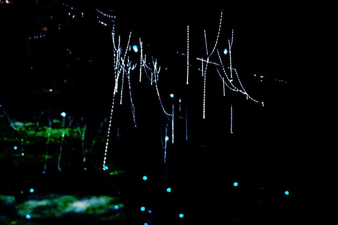 Blue Mountains Hiking Glow worms Cave Wildlife Spotlighting Night Adventure photo 10