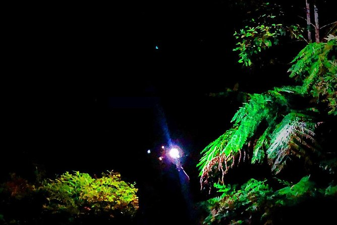 Blue Mountains Hiking Glow worms Cave Wildlife Spotlighting Night Adventure photo 8