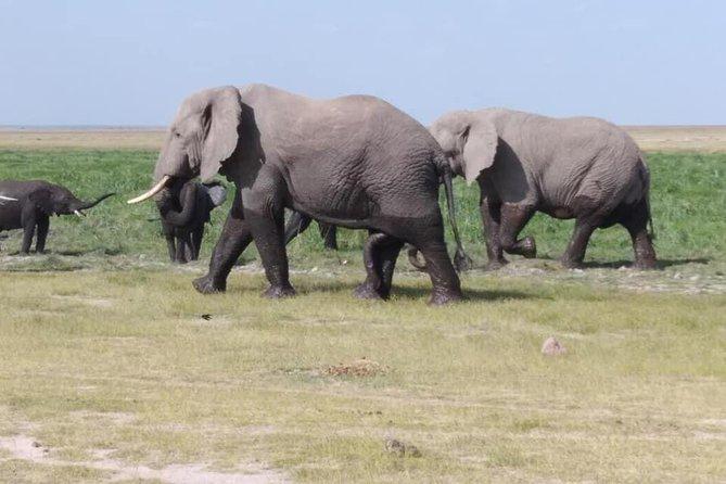 1 Day Nairobi national park