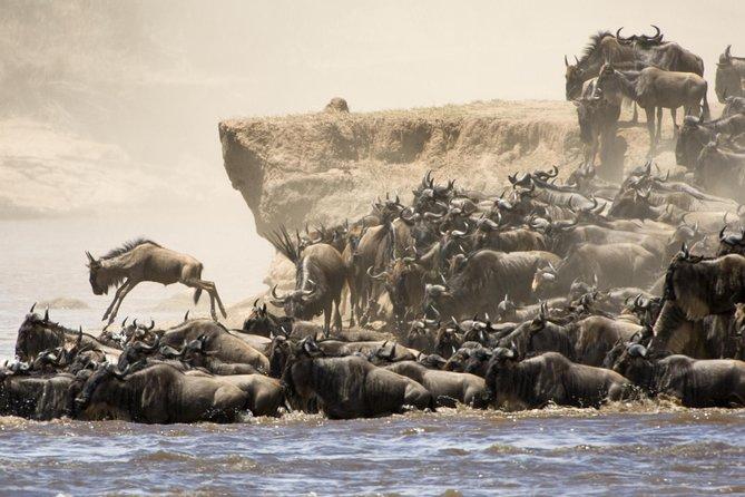 7 Days Safari Wildebeest Migration