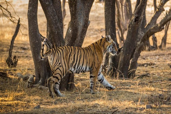 Ranthambore National Park - home of tiger's (02 Nights/03 days tour) from Jaipur