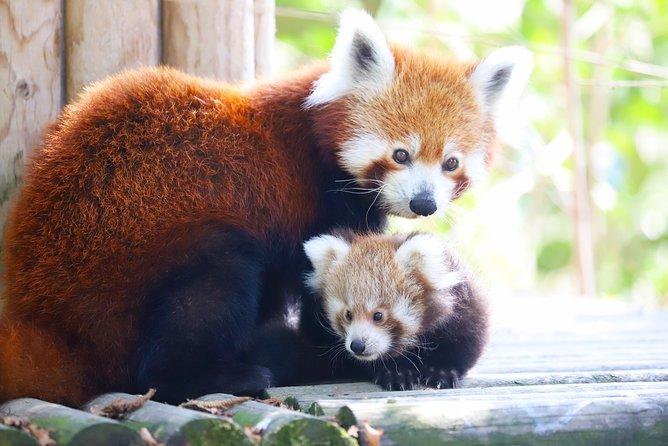FYZOO, Faruk Yalcin Zoo and Botanical Park - Darica