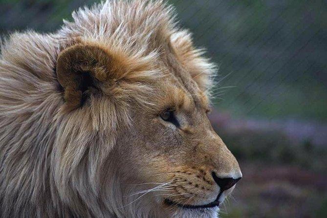 The Lion and Big Cat Sanctuary