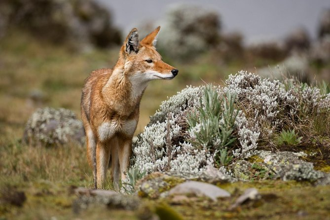 7 Days Trekking Bale Mountains