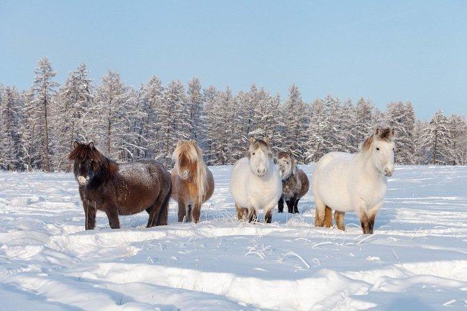 Private Tour: Yakutian Horse & Siberian Breeders In Winter