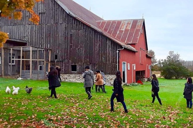 Private Full-Day Prince Edward County Wine Tour from Toronto