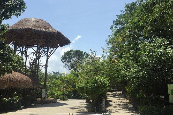 Aviary on the island of Baru