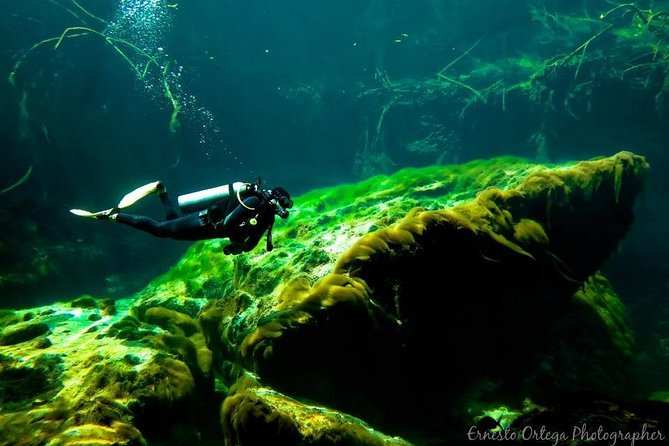 Cenote Diving for First-Time Divers and for Refresher Dives in Tulum photo 9