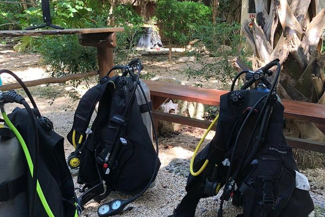 Cenote Diving for First-Time Divers and for Refresher Dives in Tulum photo 6
