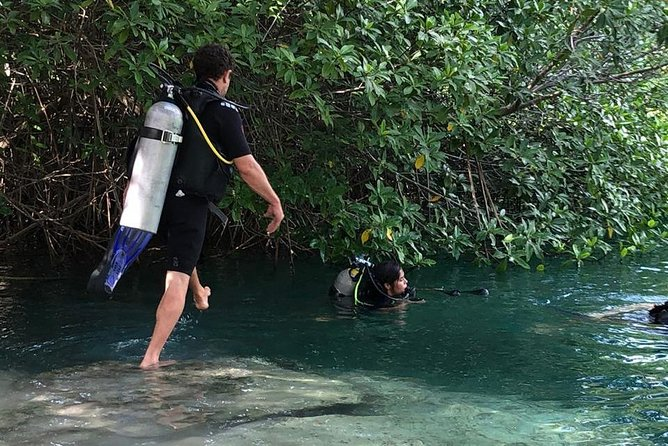 Cenote Diving for First-Time Divers and for Refresher Dives in Tulum photo 7