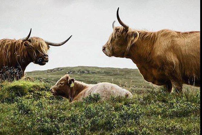 Highlands + Glencoe + Loch Ness Private Tour
