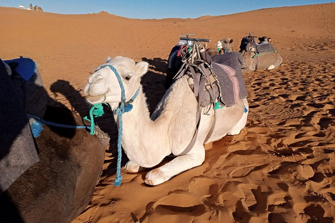 3 Days Luxury private Desert Tour From Fez to Marrakech photo 10
