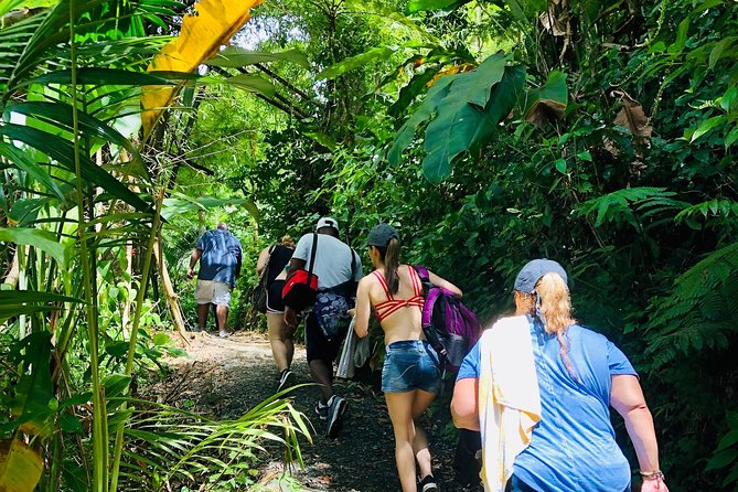 El Yunque National Rainforest Adventure from San Juan photo 6