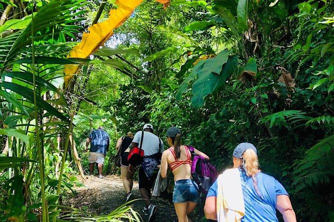 A Day at El Yunque Rainforest & Beach Tour