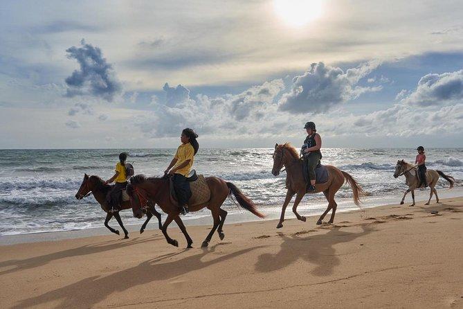 Phuket Horse Riding Club