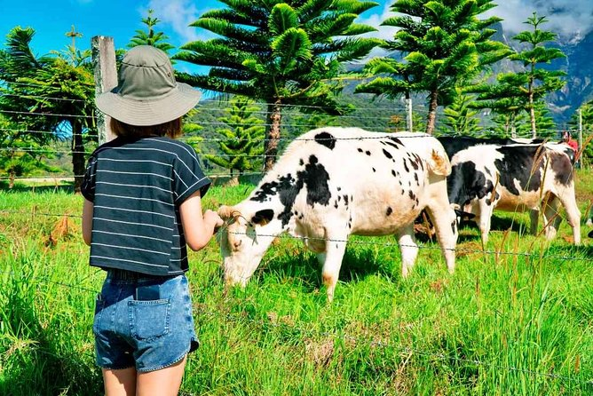 2d1n Kinabalu Park & Poring Canopy Walk & Desa Cow Farm Tour