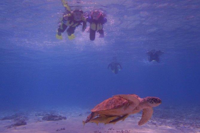 Swim with sea turtles at Kerama islands