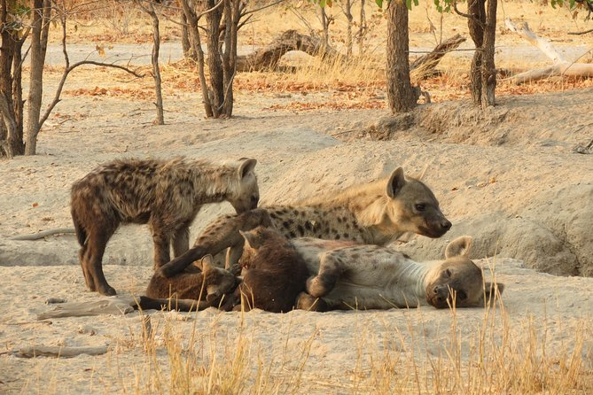 1-Day Moremi Game Reserve Day Trip