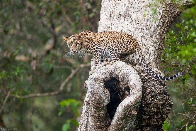 Safari In Wilpattu National Park