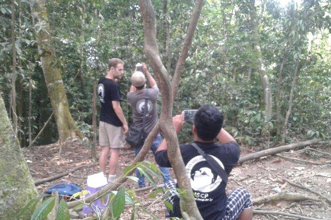 Bukit Lawang tour ,see Semi wild Orangutan (3D2N)