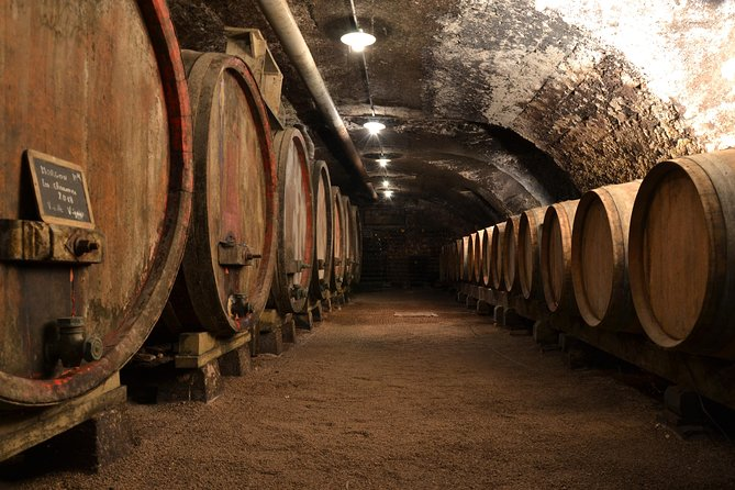 Dégustation Vins et Fromages au Domaine