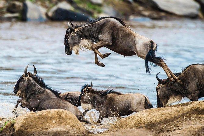 Great Migration & Mara River Crossing - 8 Days