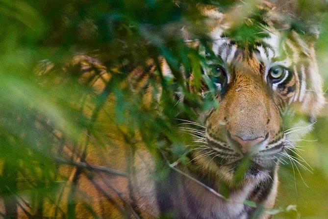 Private 5 Days Golden Triangle Tour and Ranthambore Wildlife Safari
