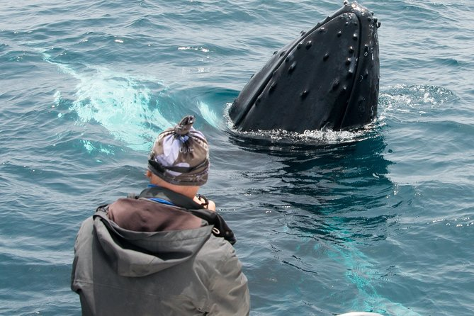 Whale Watching Tour - Boa Vista - full day