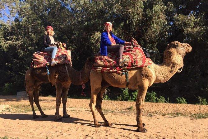 Camel Tour : 2 hours camel ride in Agadir