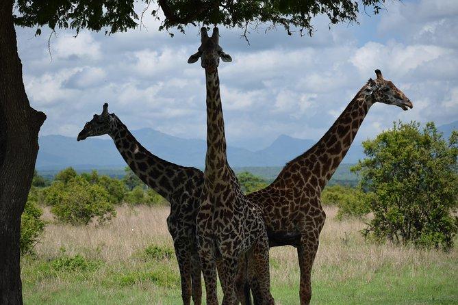 3 days safari to Mikumi and Udzungwa