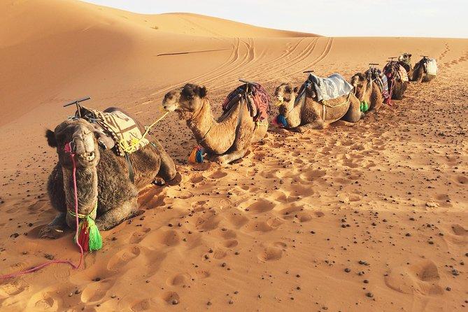 2days 1night tour to Zagora desert