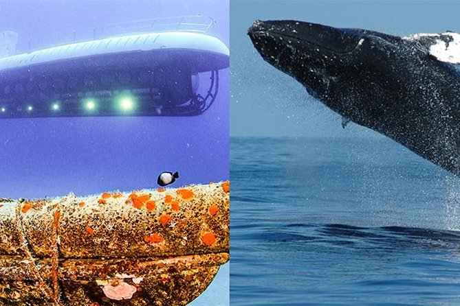 Maui Atlantis Submarine Adventure and Whale Watch Tour