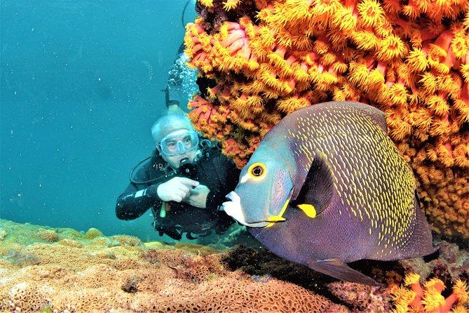 Scuba Diving in Arraial do Cabo: Day Trip from Rio