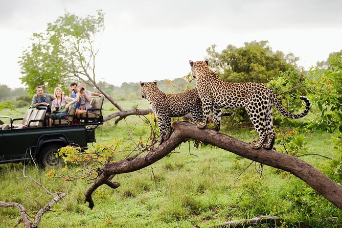 Half Day Safari at Yala National Park From Yala / Tissamaharama