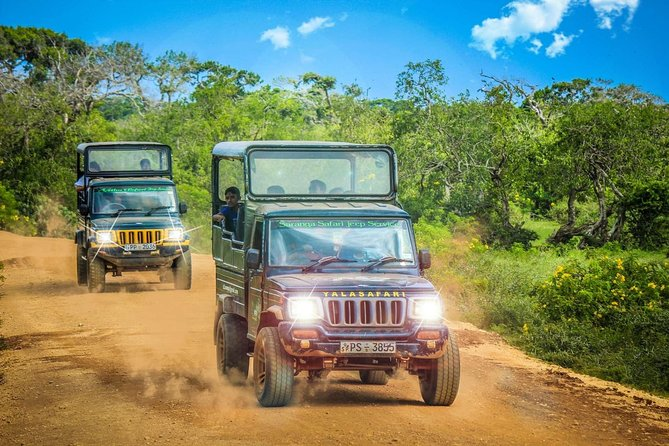 Half Day Safari at Yala National Park with Lunch from Kalutara / Bentota photo 4