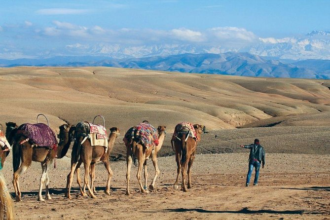 Agafay Desert Camel Ride with Diner/Lunch