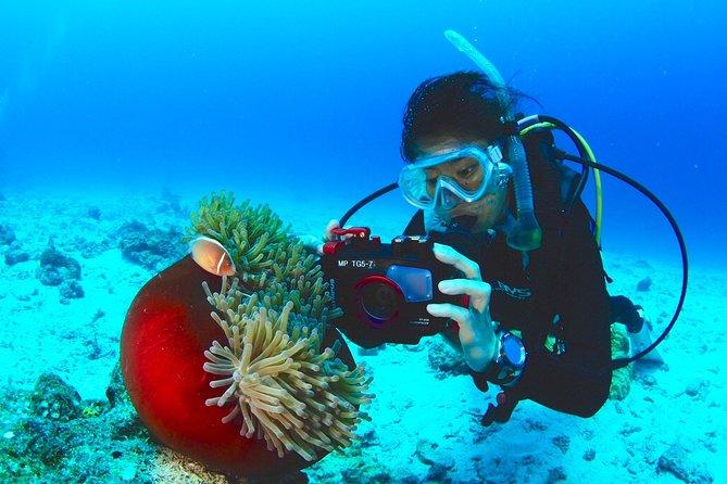 【Okinawa/Kerama】Fun Diving 3 dives! Free rental of camera & diving equipment