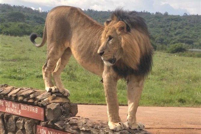 Nairobi National Park game drive. Free Airport pick / drop off.