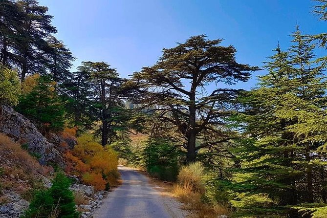 Car & Driver - Beit El Dine, Deir El Amar & Cedars of Chouf - Private Car