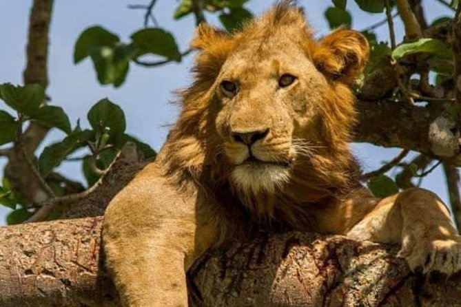 10 days Rwanda-Uganda Safari